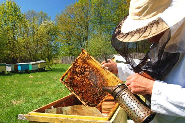 apiculteur2