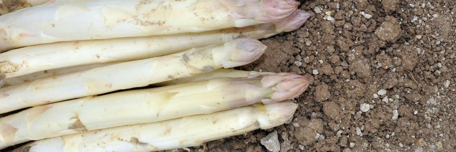 asperges-blanches2