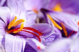 fleur-gros-plan