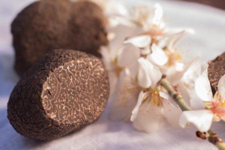 Luberon, Ménerbes, Maison des vins et de la truffe. Truffes brossées. La mélanosporum se reconnait à son veinage serré et à sa couleur d'un brun profond.