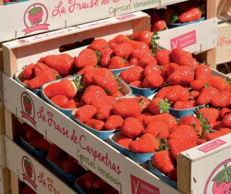 Fête fraise Carpentras