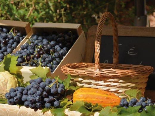 Fête du raisin muscat - Villes-sur-Auzon