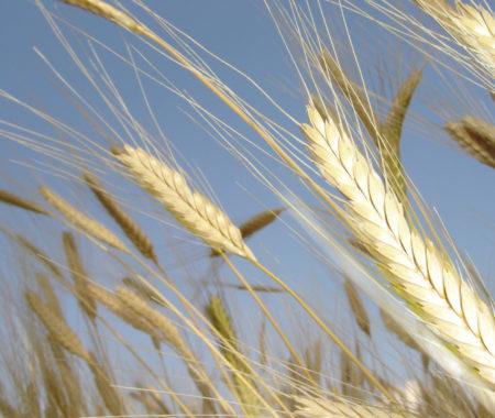 10-19- Mazan Rouret atelier blé