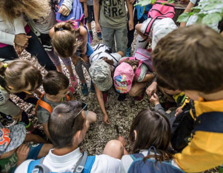 sept 29-Ferrasières-Brame du cerf Kids BD Louis Bonnet